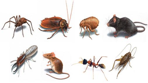 diệt côn trùng tại hải dương